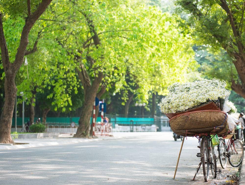 Vài ngày nay, trên những tuyến đường lớn nhỏ của Hà Nội rải rác xuất hiện những chiếc xe đạp bán hoa cúc họa mi.