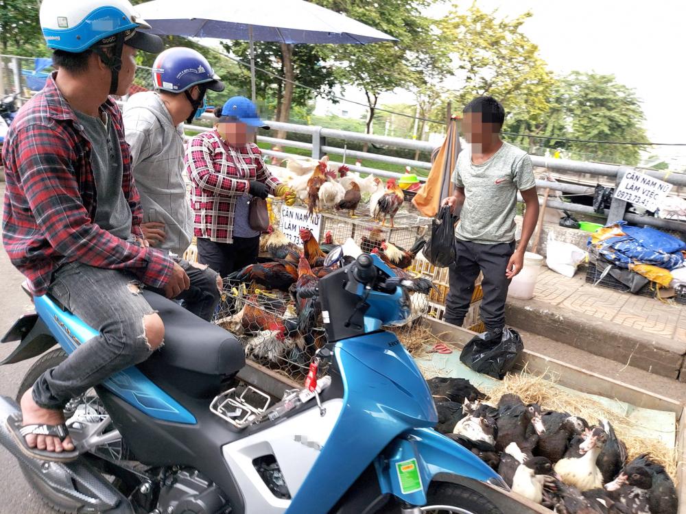 Gia cầm được bày bán, giết mổ tại chỗ ở chợ tự phát gần khu công nghiệp Tân Tạo (Q.Bình Tân)