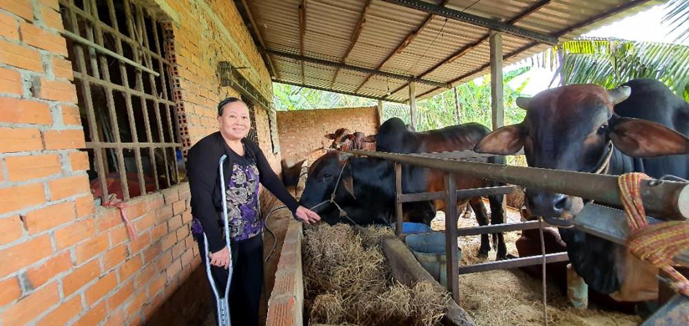 Cô Mỹ và đàn bò của mình