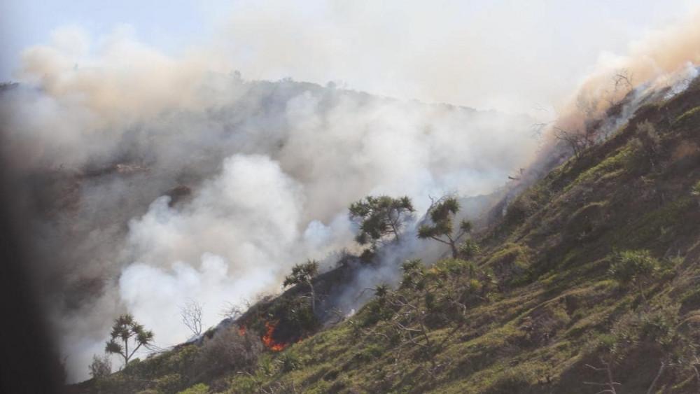 Ngọn lửa phá hủy 42% diện tích hòn đảo di sản của Úc.