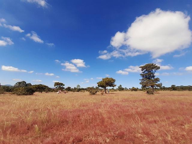 Đồi cỏ hồng có địa thế bằng phẳng, cảnh vật đẹp nên cứ đến hẹn, nhiều người dân lại tụ tập đến đây chụp ảnh làm kỷ niệm
