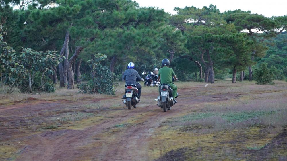 Rừng thông Đắk Đoa trở thành điểm thăm quan của nhiều du khách trong thời gian qua