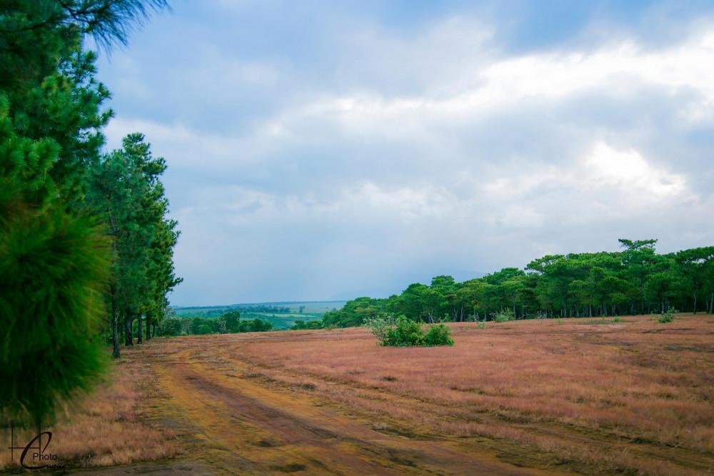Cánh rừng thông không chỉ là điểm thăm quan du lịch mà còn là nơi