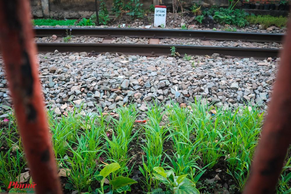 UBND quận Phú Nhuận đang mong muốn tạo mảng xanh cho khu vực nhưng không làm ảnh hưởng đến an toàn hành lang đường sắt