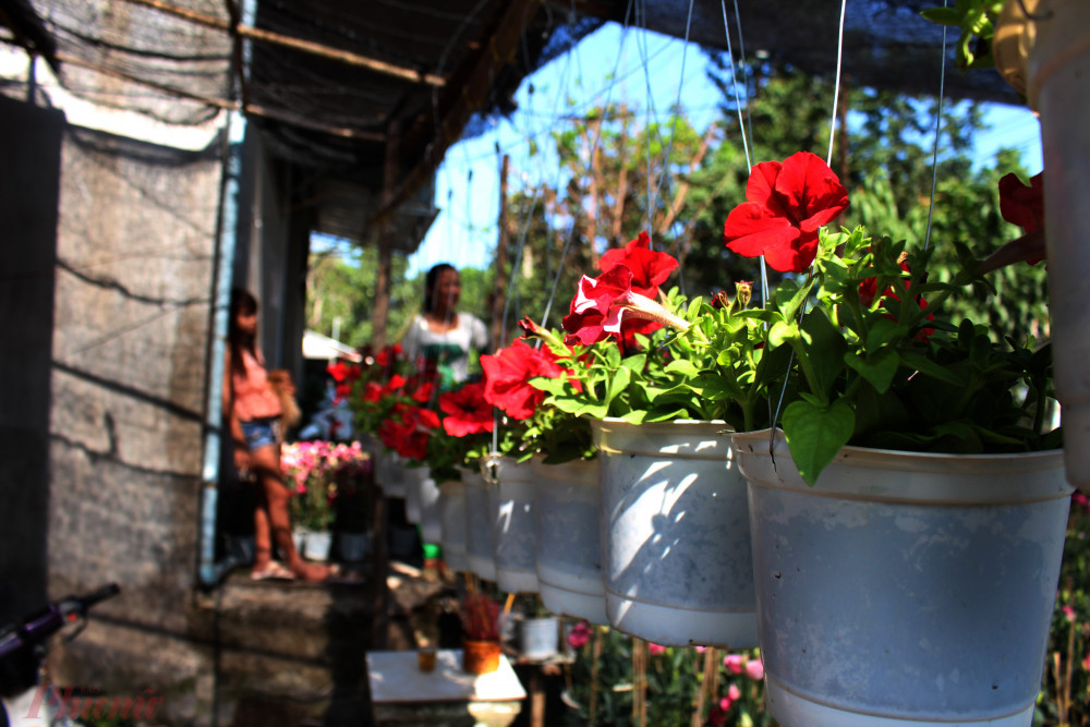 Làng hoa Sa Đéc đã sẵn sàng phục vụ du khách dịp Tết.