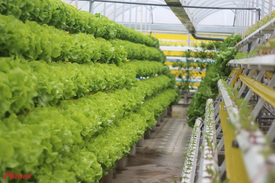 Du lịch nông nghiệp công nghệ cao Củ Chi