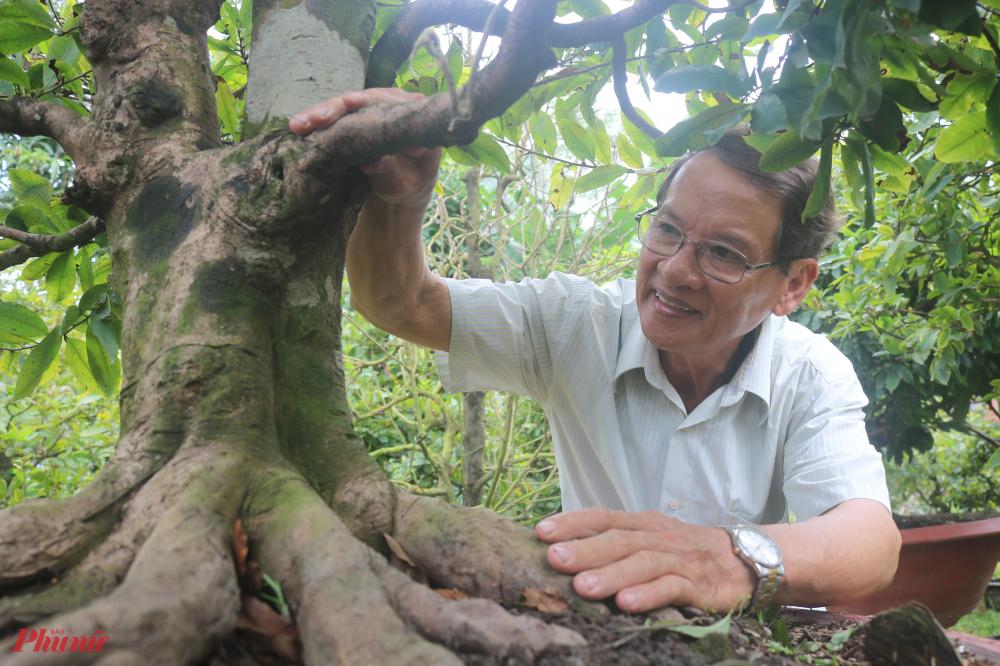 Mân mê những gốc mai cổ, ông Minh cho rằng đó là niềm vui sống mỗi ngày của ông