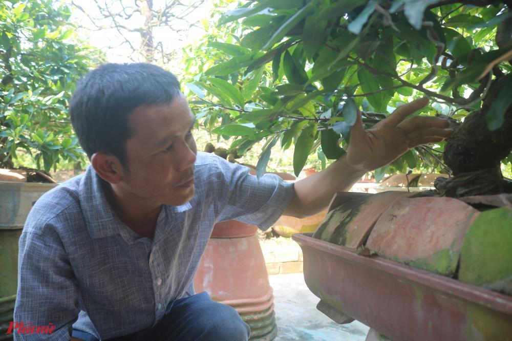 Ngoài chơi mai, anh Hòa còn là một trong những bác sĩ bắt bệnh mai nổi tiếng
