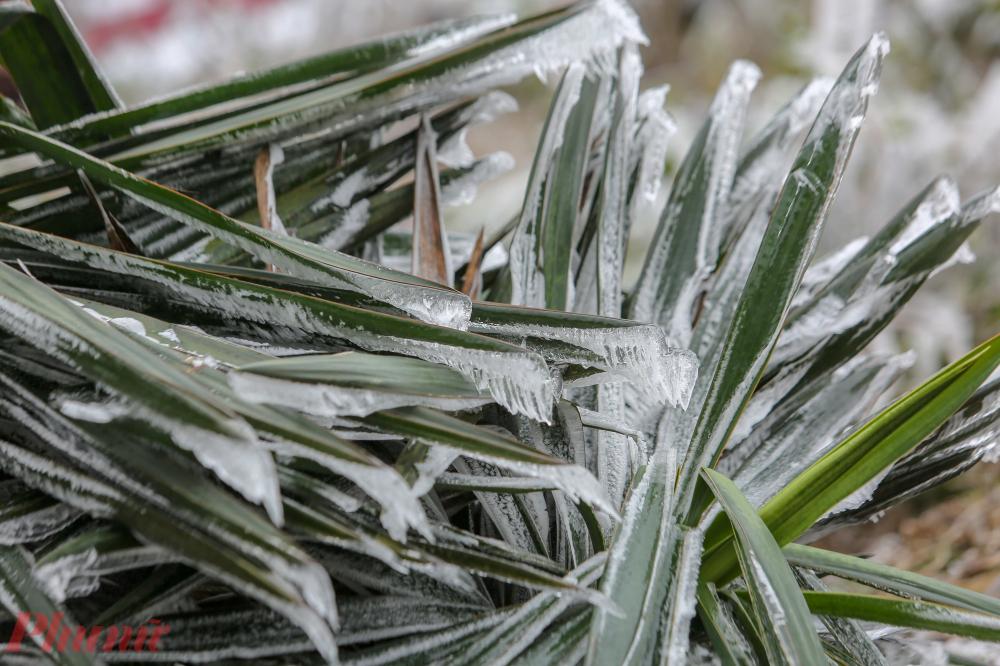 Nhiệt độ dần ấm lên làm băng tan chảy.