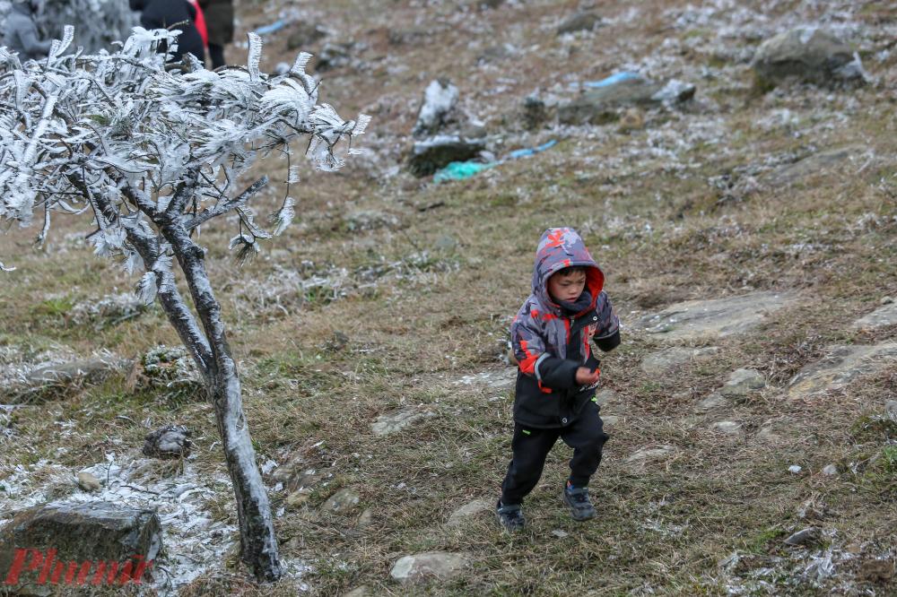 Các em nhỏ cũng đi cùng gia đình lên đỉnh núi Mẫu Sơn để xem băng giá.