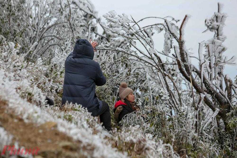 Trong rừng cây phủ đầy băng giá, đâu cũng là điểm chụp ảnh đẹp.