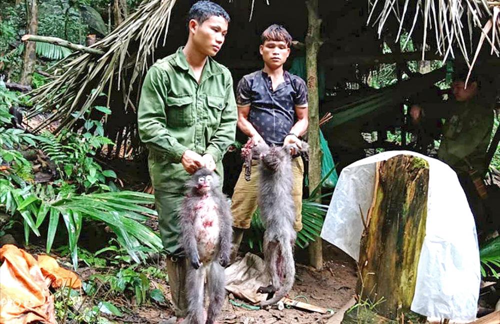 Sau khi dùng súng tự chế bắn chết hai con voọc quý hiếm, Lô Văn Hằng, Viêng Văn Thủy và cả nhóm đã bị xử 13 năm 6 tháng tù giam