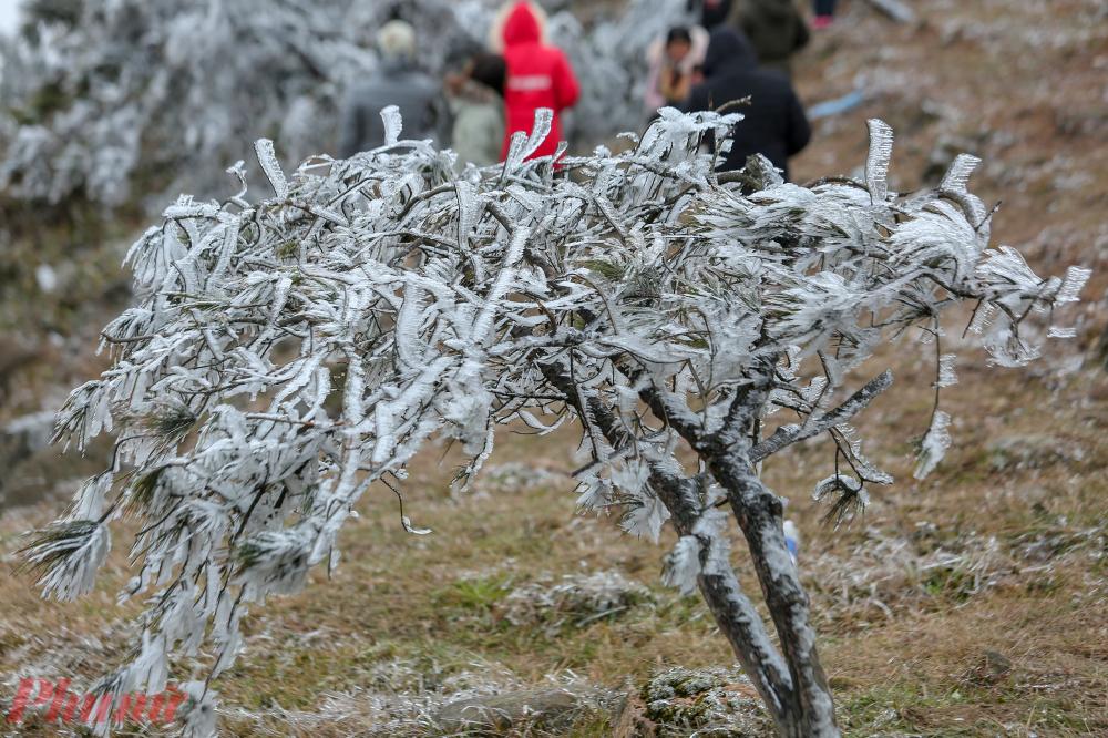 Hiện tượng băng giá tại đây khá là hiếm gặp. Vào năm 2018, khu du lịch Mẫu Sơn cũng thu hút nhiều người đến xem do xuất hiện băng giá khi thời tiết còn -1 độ.