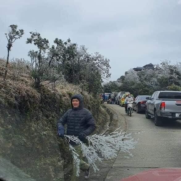 Những cành cây đang gồng mình chống chọi với băng giá lại bị những kẻ vô ý thức hủy hoại