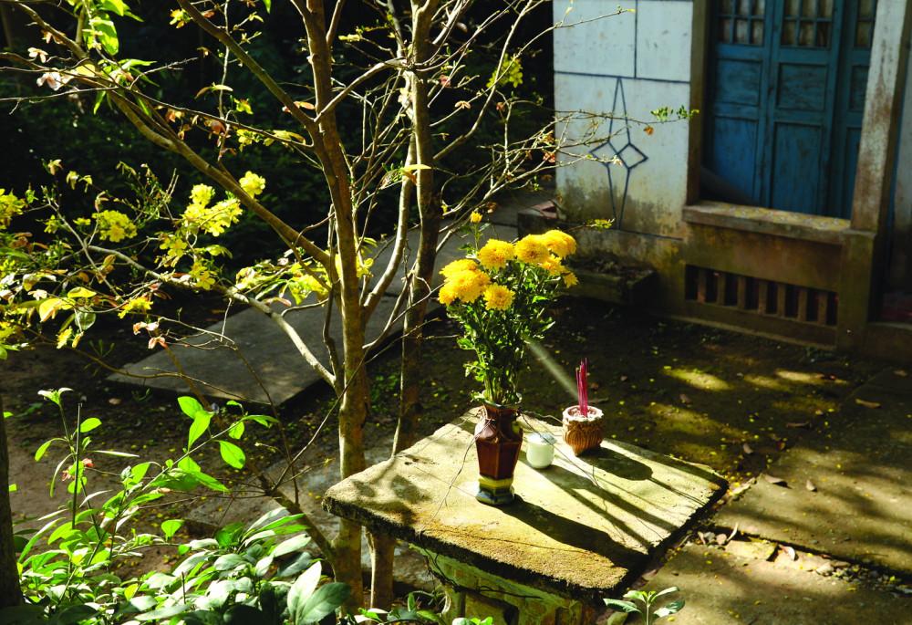 Thấy mai vàng là thấy tết nhưng không còn là ngày xưa với những chiều ra sân tước lá, tưới nước, chờ đợi...