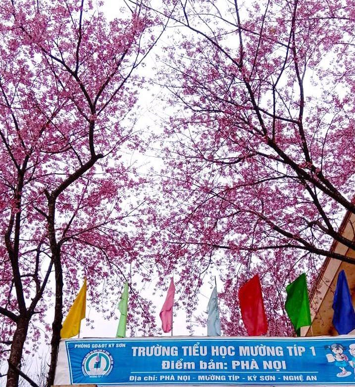 Nắng ấm ban ngày, song đêm xuống nhiệt độ nhiều trường ở huyện biên giới Nghệ An lại giảm rất thấp