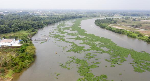 Sông Sài Gòn đoạn qua nhà máy nước Tân Hiệp mùa khô nước bị nhiễm mặn - Ảnh: TTO