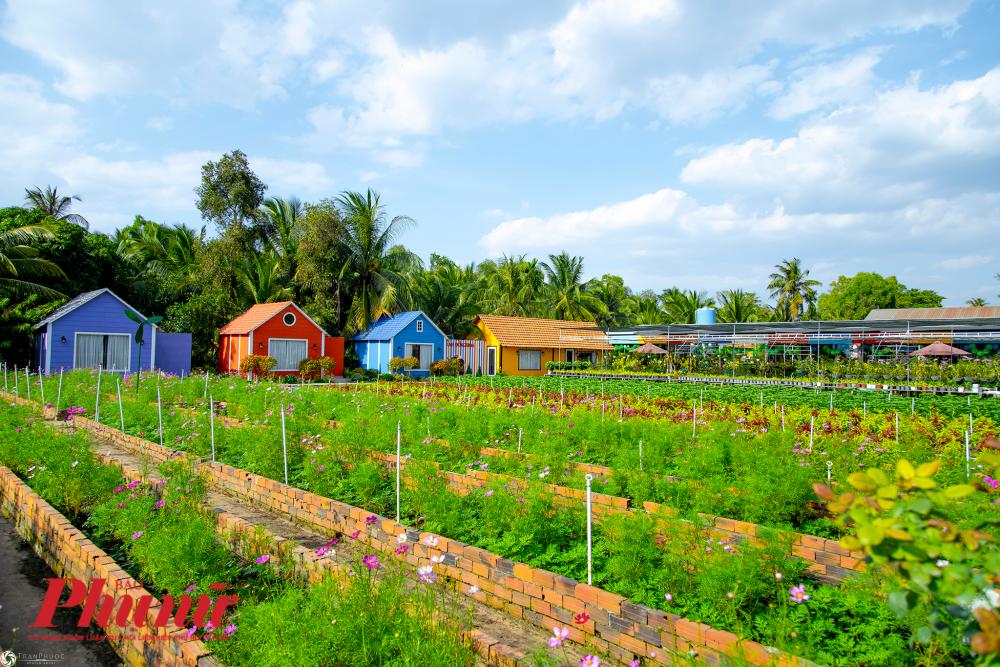 Những ngôi nhà gỗ đầy màu sắc bố trí xung quanh các luống hoa tô điểm thêm chove3 đẹp của cánh đồng.
