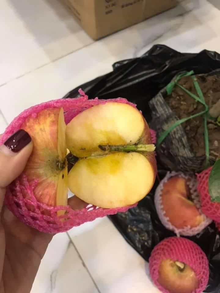 Hầu hết những trái táo khi bổ dọc đều bị thâm hết phần lõi do quá trình tạo cuống giả.