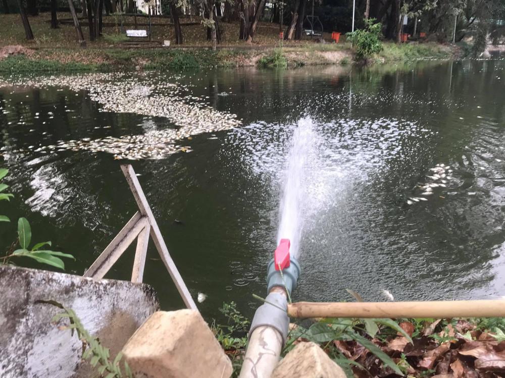 Nước từ hồ bơi sát bên xả xuống hồ