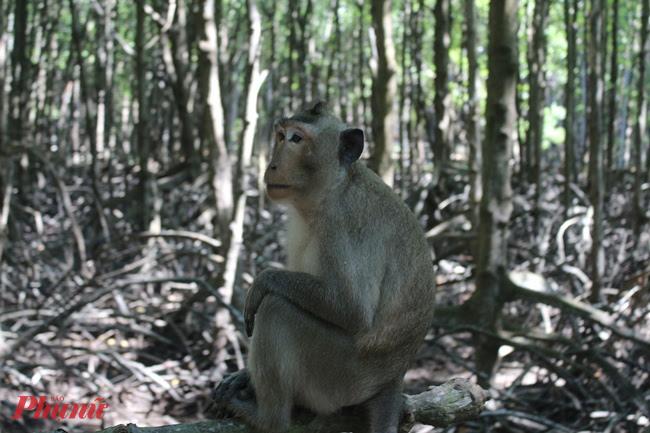 Khi tham quan đảo Khỉ, bạn cần chú ý tư trang nếu không sẽ bị hậu duệ của Tôn Ngộ Không cướp mất.