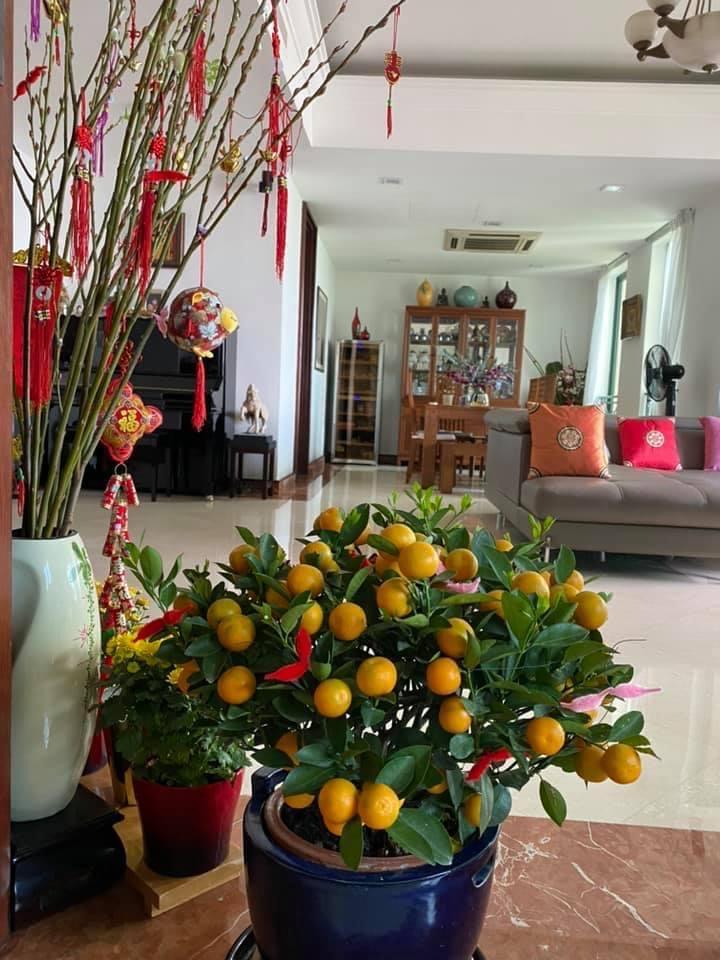 NSƯT Minh Trang chia sẻ hình ảnh trang trí nhà cửa mừng xuân mới từ Singapore. Cô cho biết cây quất được mua.