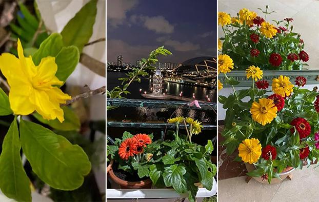 Một vài hình ảnh hoa khoe sắc trước thềm năm mới được nữ nghệ sĩ chia sẻ.