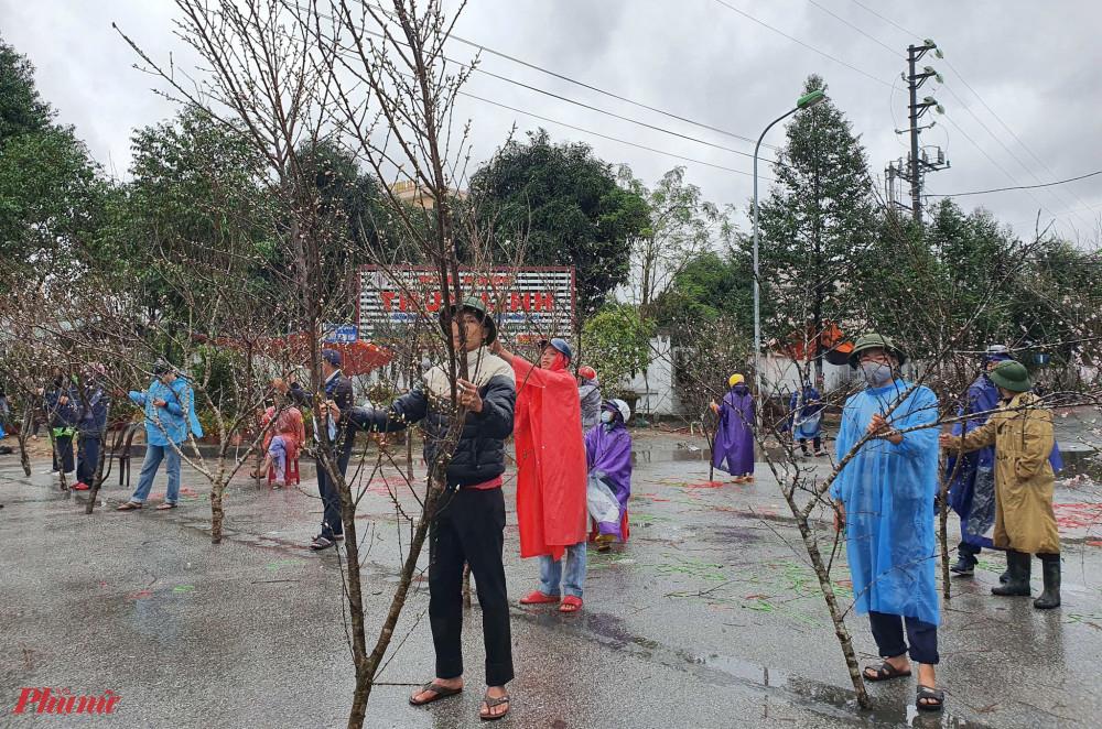 Người bán đào tràn ra đường chờ khách giữa mưa