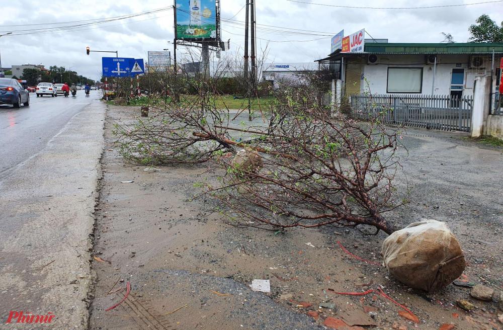 Nhiều cây đào bị mưa gió quật đổ