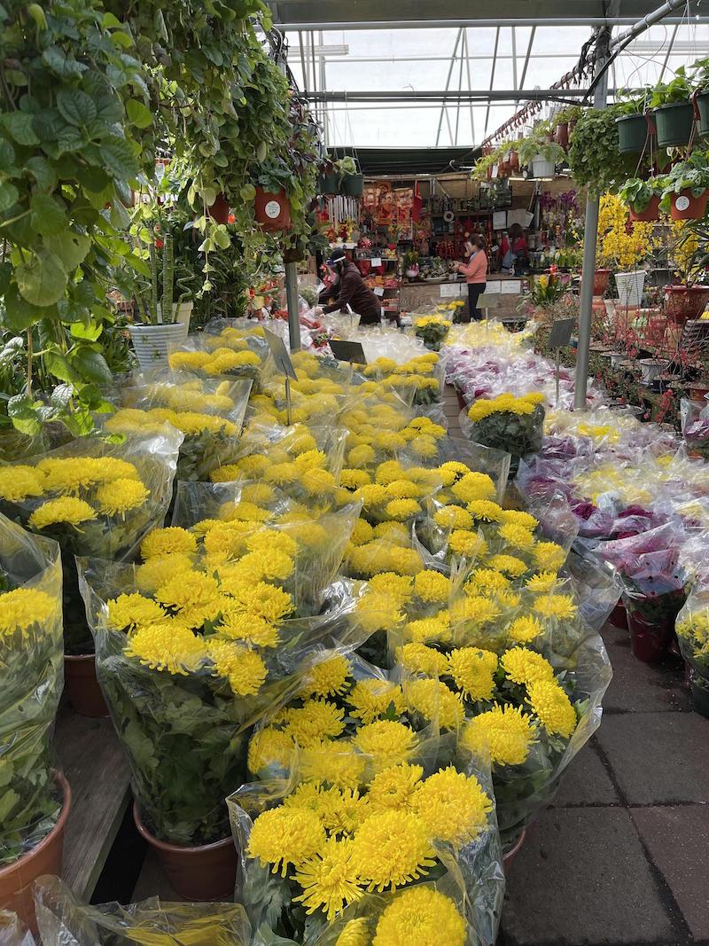 Nhiều hoa với đủ màu sắc phụ ụ cho người Việt