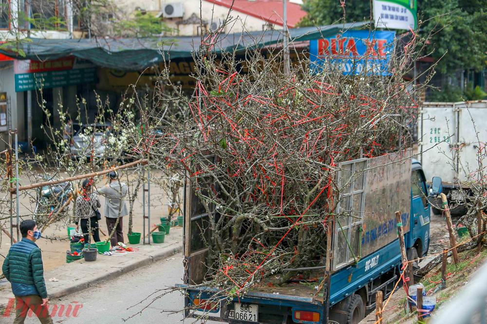 Trong vài ngày trở lại đây, trên dọc các tuyến phố như Lạc Long Quân, Âu Cơ, Nghi Tàm, gần chợ hoa Quảng Bá đã bắt đầu trưng bày các cành hoa lê rừng với