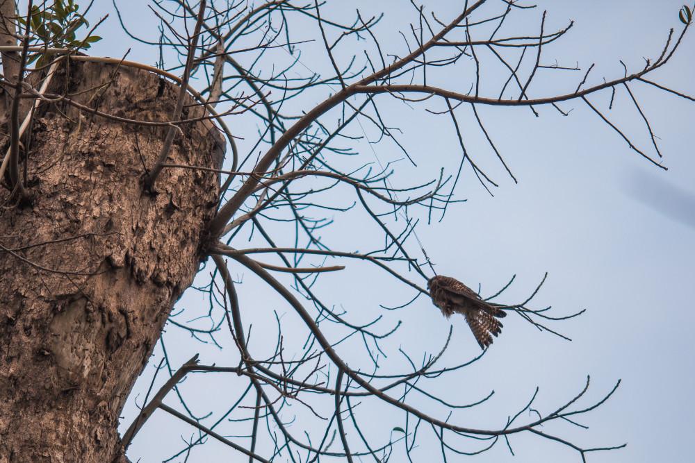 Chú chim gặp nạn. Ảnh: Nguyễn Cường