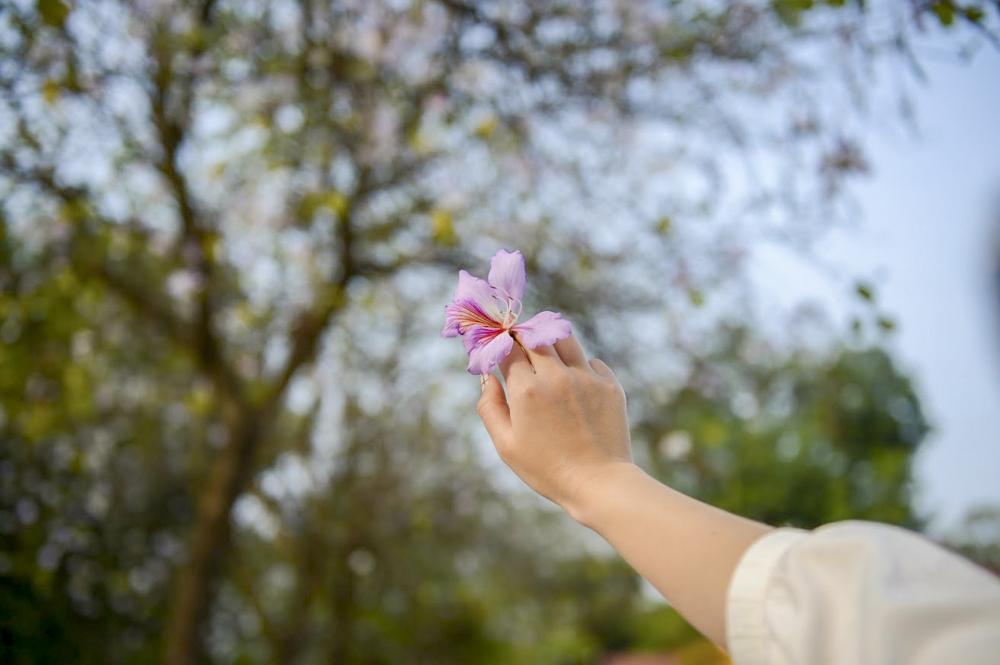 (Ý nghĩa hoa ban trong cuộc sống là mang lại điều tốt đẹp. Nó được biết đến là loài hoa thể hiện cho sự thanh cao, chân thành. Đồng thời còn thể hiện một tình yêu son sắt, thủy chung và gắn bó keo sơn.)