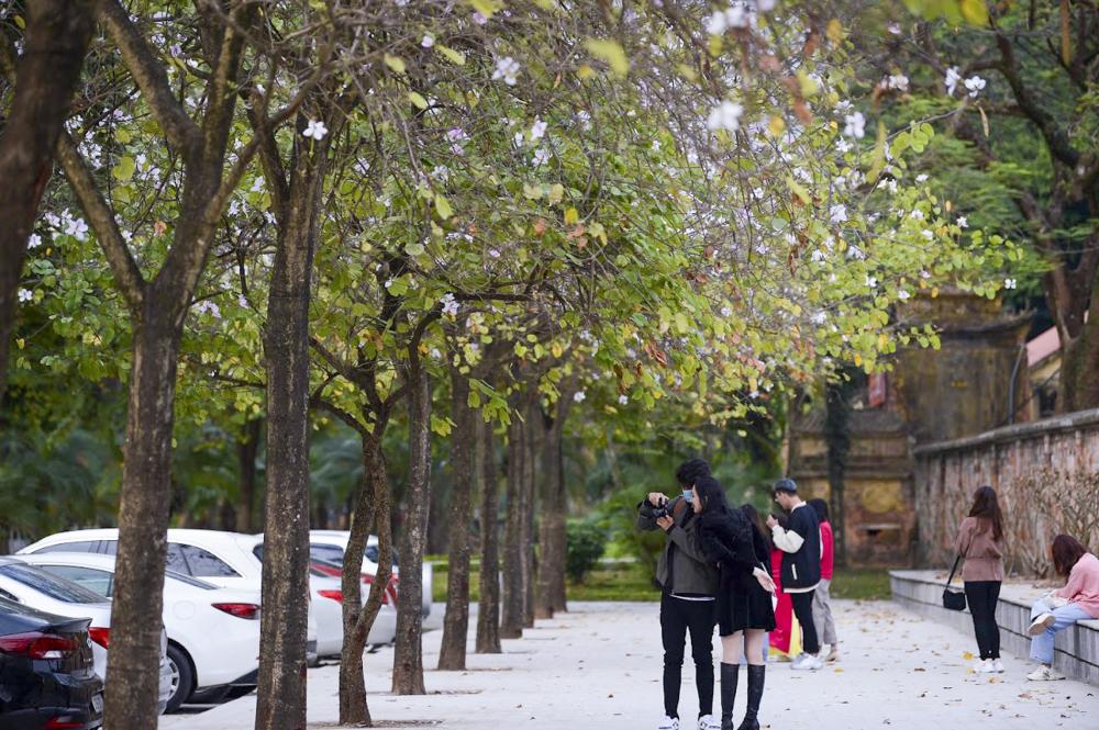 Những sắc hoa ban đang bung tỏa nhiều tuyến phố, trong công viên làm cho Hà Nội trở nên thơ mộng, đắm say biết bao người.