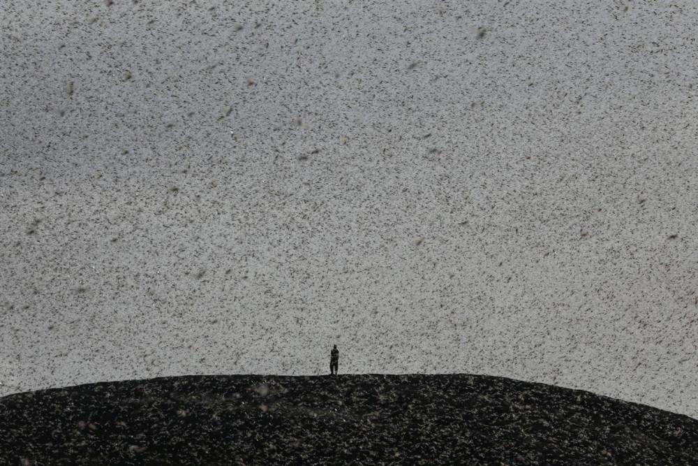 Một người đàn ông đứng trên đỉnh đồi ở Nanyuki bị nhấn chìm trong 'biển' châu chấu.