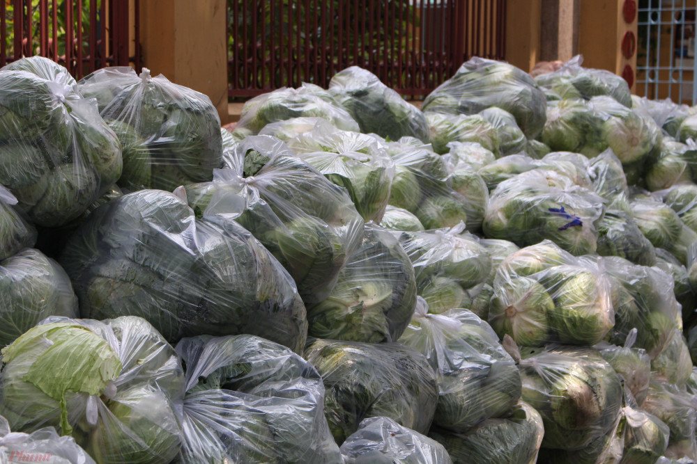 Bắp cải của nông dân Hải Dương được người Sài Gòn mua về phát miễn phí