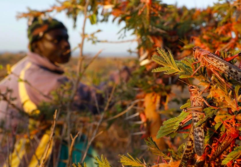 """Laura Stanford, người sáng lập The Bug Picture, cho biết: """"Chúng tôi đang cố gắng tạo ra hy vọng trong một tình huống vô vọng và giúp những cộng đồng này thay đổi quan điểm của họ để coi những loài côn trùng này như một loại cây trồng theo mùa có thể thu hoạch và bán lấy tiền""""."""
