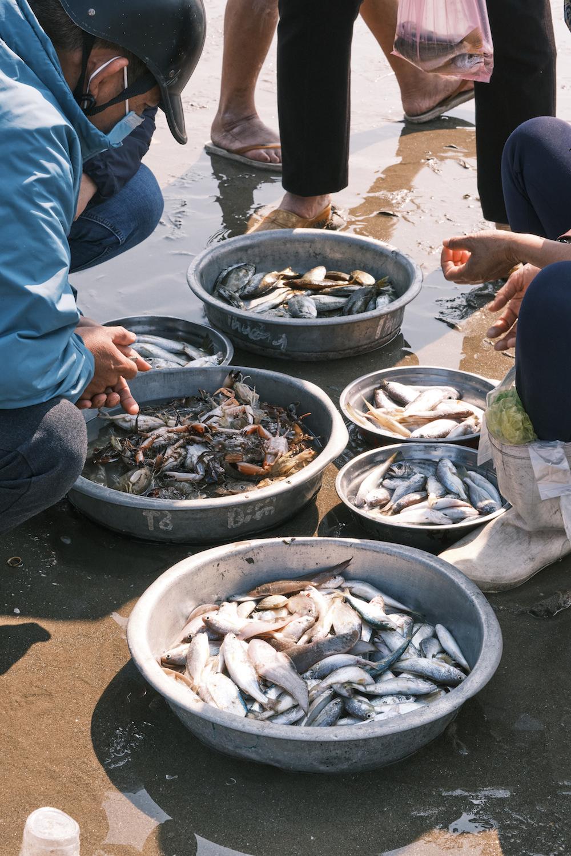 Muốn mua được những cá nhỏ, phải đến biển từ tinh mơ