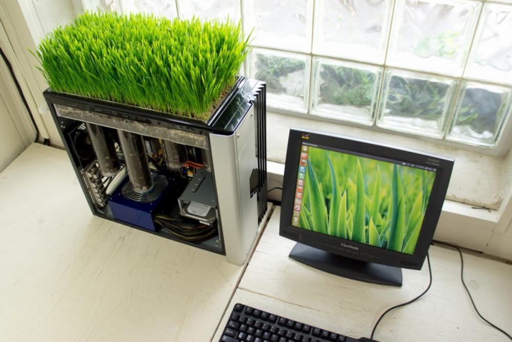 Hình 7. Khu vườn lúa mì mi-ni trong thùng CPU điểm tô cho một không gian làm việc hiện đại đầy phong cách.