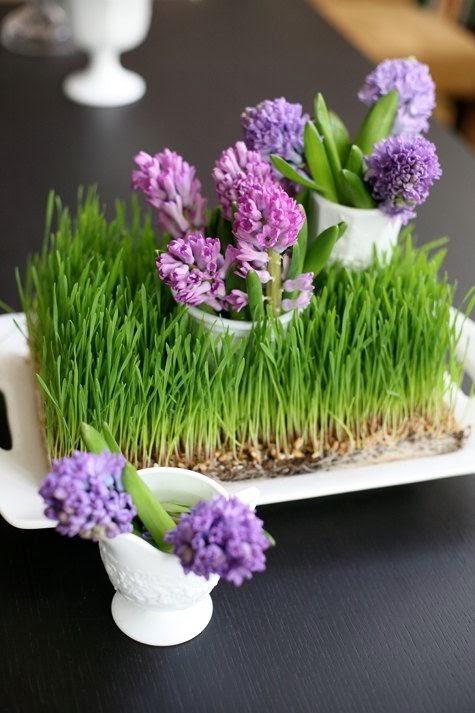Hình 8. Một khay cỏ lúa mì non điểm xuyến cùng bông hoa màu tím trong lọ trắng toát lên vẻ đáng yêu, tươi đẹp đầy sức sống cho bàn ăn hay bàn tiếp khách.