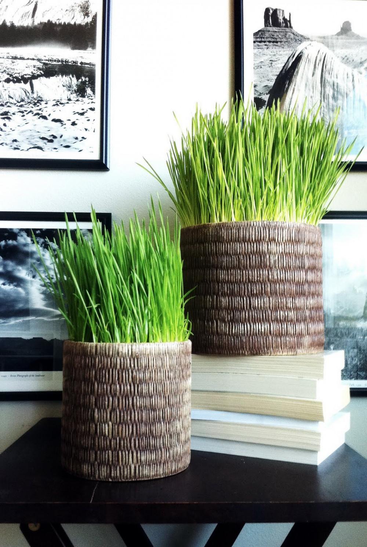 Hình 5.Chậu cỏ lúa mì đan từ thực vật tươi mát là ý tưởng trang trí hiện đại đẹp mắt cho mọi không gian