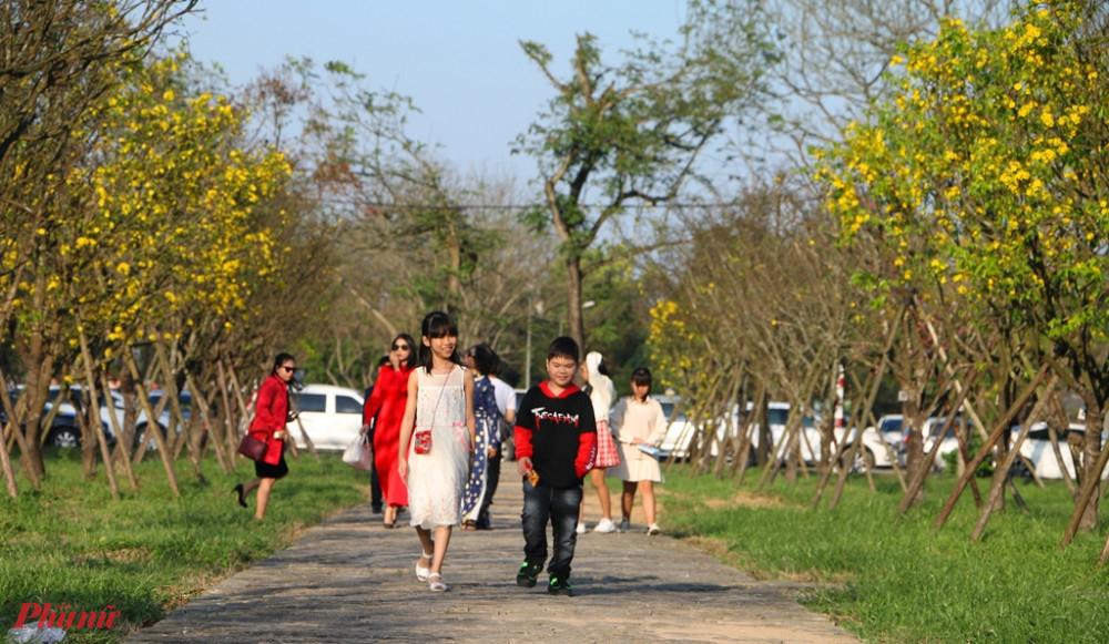 Hoàng mai khoe sắc bên công viên trươc Ngọ Môn Huế