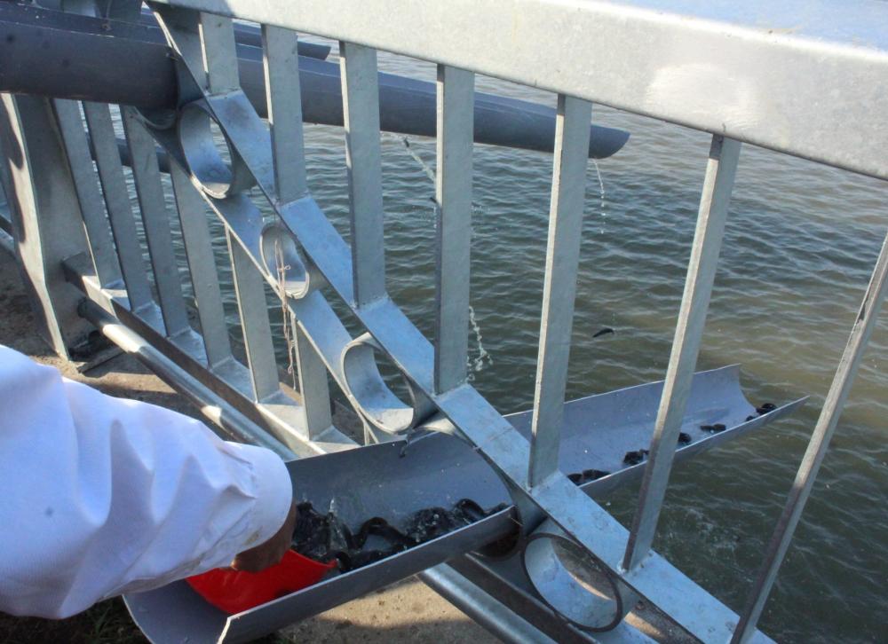 Hoạt động thả cá trên sông Sài Gòn.