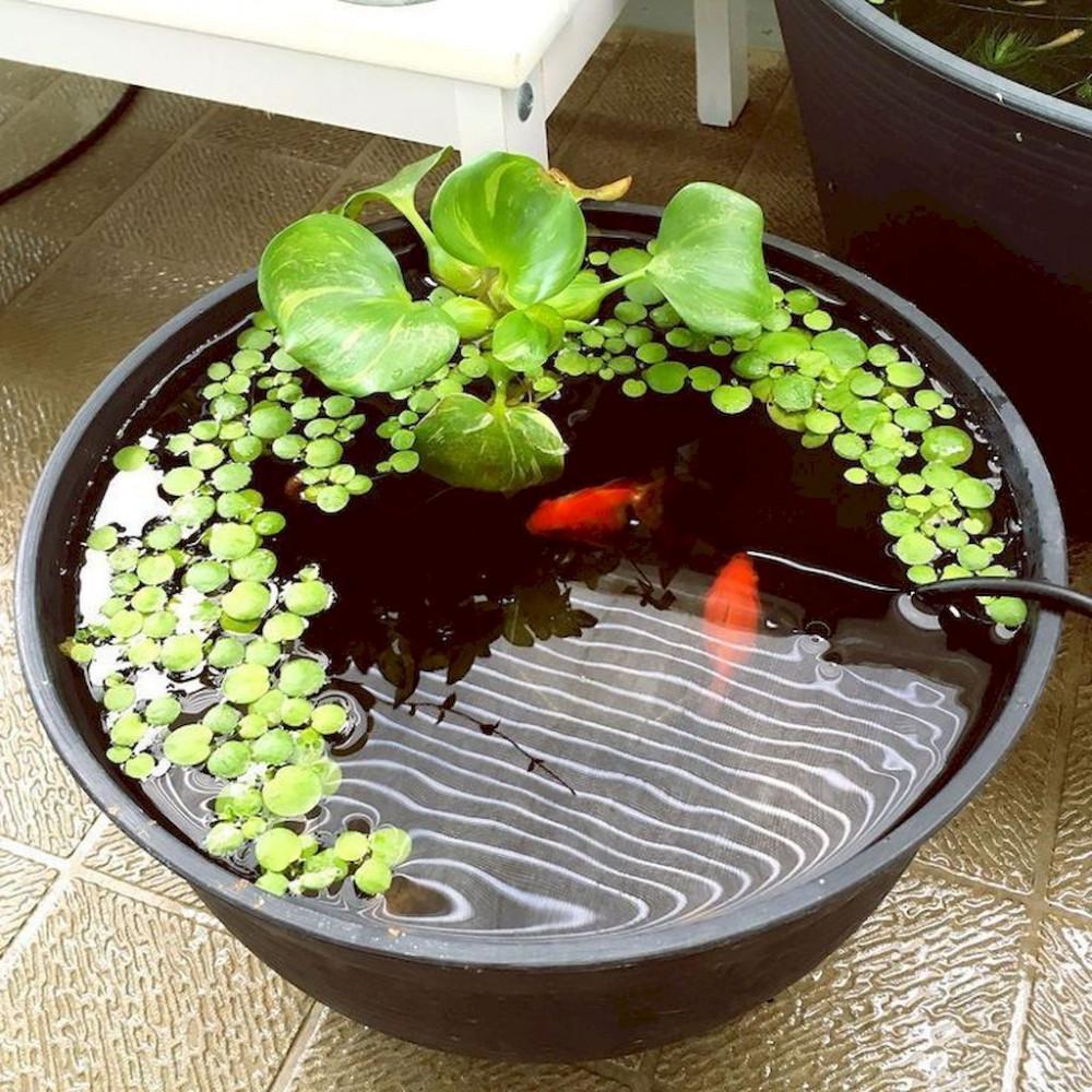 Hình 6. Một hồ cá Koi nhỏ với bèo, tảo xanh đặt ở ban công là ý tưởng đáng yêu mang không khí rộn ràng, yêu đời mà lắng động vào không gian.