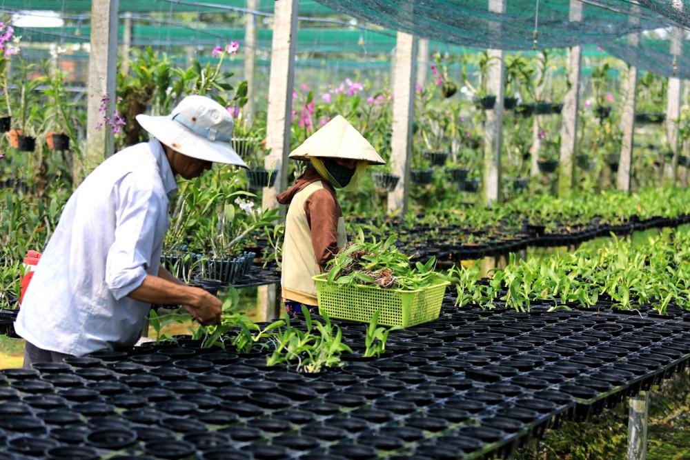TP.HCM đã có nhiều chính sách thu hút, phát triển nông nghiệp công nghệ cao - Ảnh: Đỗ Minh