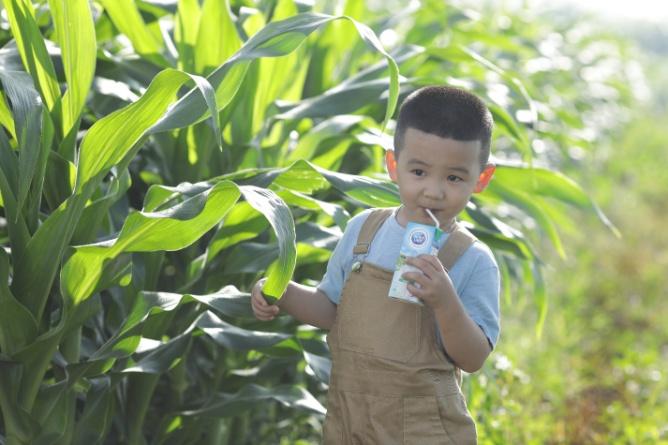 Với các bé, mỗi hộp sữa tươi (180ml) trong bữa sángsẽ đáp ứng khoảng 12% năng lượng cần thiết cho cơ thể, giúp bé khởi động ngày mới một cách đầy hăng hái. Ảnh: CGHL