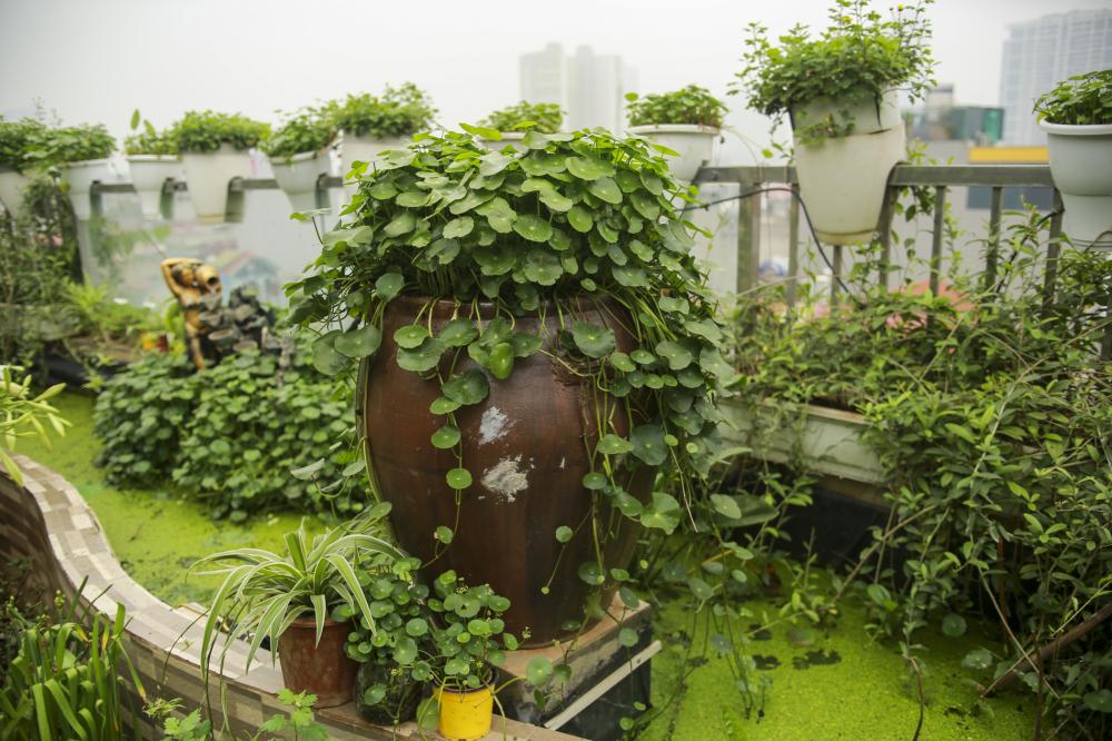 Khu vườn luôn được chị Thúy thay đổi, đón nhận những điều mới mẻ, bởi có lẽ đó cũng là cách khám phá và phát triển bản thân.