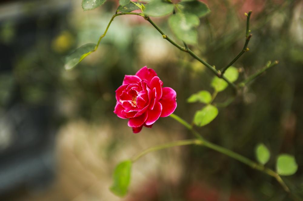 Loài hoa đầu tiên chị Thúy trồng trong vườn nhà mình là lan rừng. Là người chơi hoa sành sỏi, mùa nào hoa nấy, chị còn trồng thêm sen hồng vào mùa hè, cuối thu cúc họa mi, vàng rực rỡ của hoa cúc chi cuối đông, hay các loại mẫu đơn, nhài, mộc. Khu vườn còn sản xuất cả rau, bưởi, vú sữa, đu đủ, khế, chanh,... Nói chung không thiếu thứ gì, chị cười.
