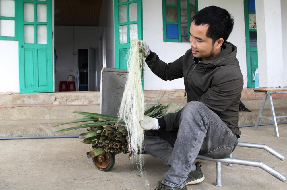 Anh Nguyễn Văn Hạnh và những sợi dứa được tách từ lá dứa