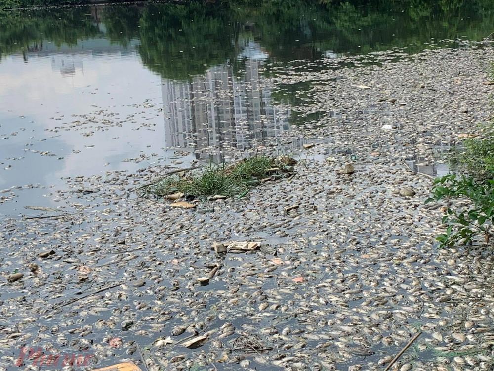 Đến hơn 13 giờ, vẫn chưa có đơn vị chức năng nào đến xử lý hiện trường nên cá chết bốc mùi hôi nồng nặc, các cư dân phải đóng cửa để tránh mùi hôi.